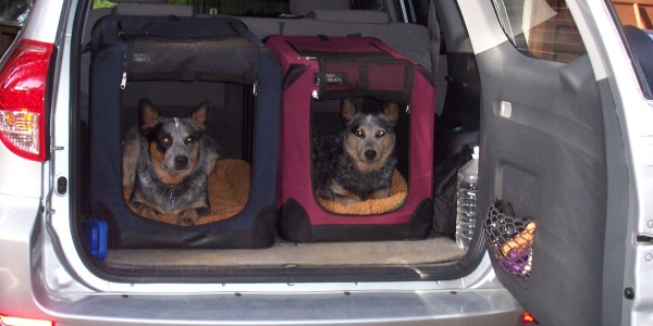 Cachorro dentro do carro 1