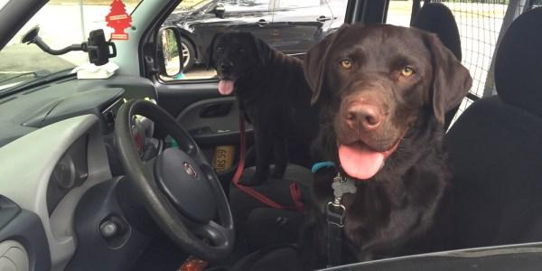 Cachorro no carro 1