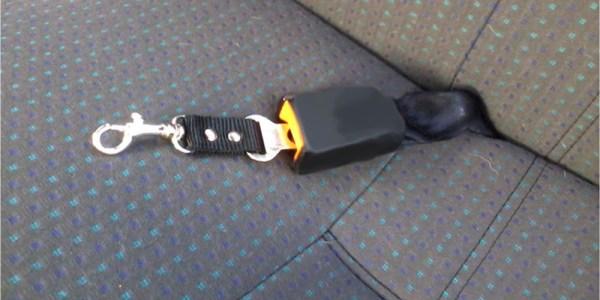 Cinto segurança para cachorro 1