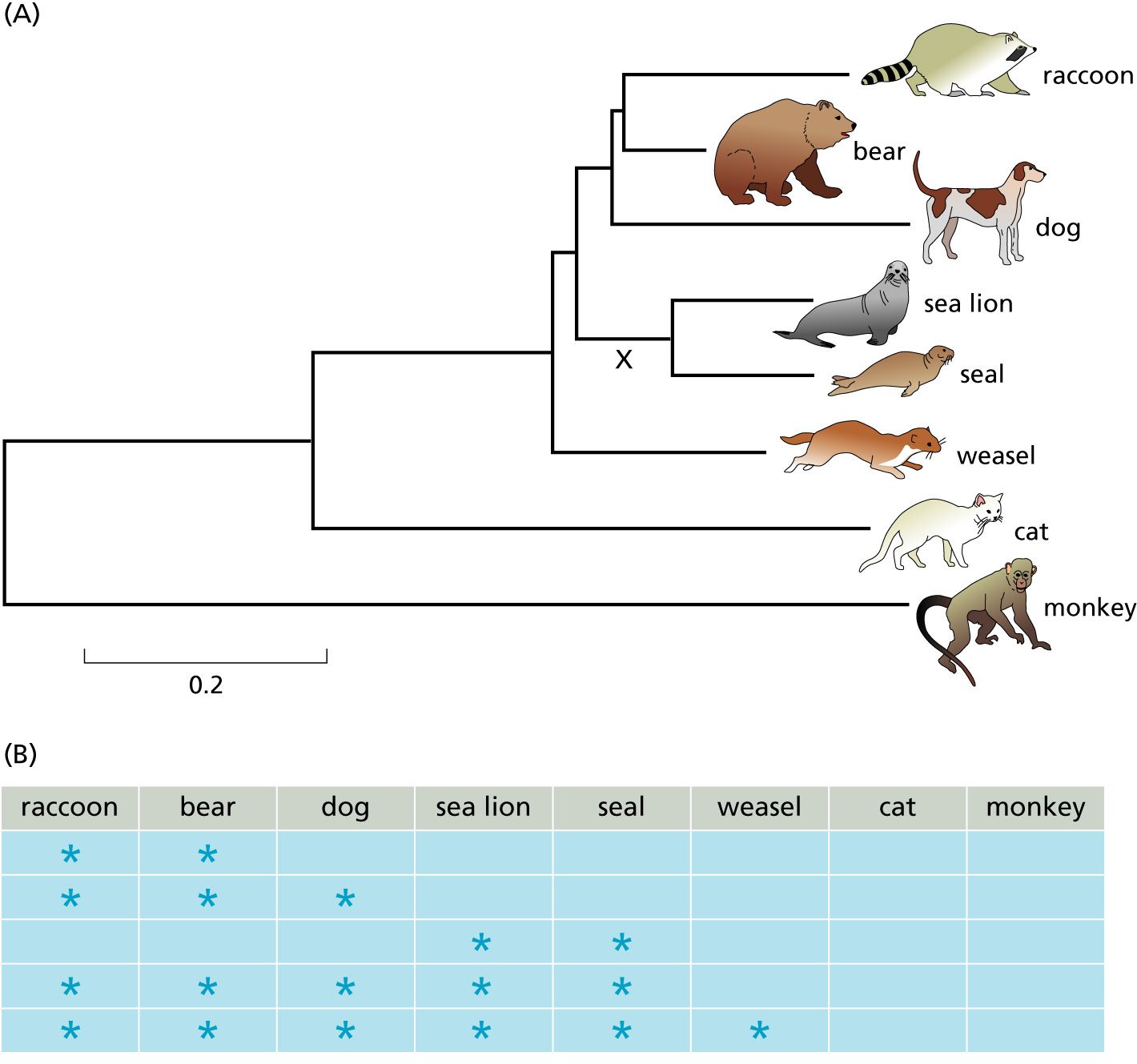 Evolutionary Trees Lesson