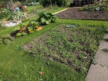 Carrot Tops Allotment My real view 8