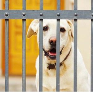 Animal Quarantine