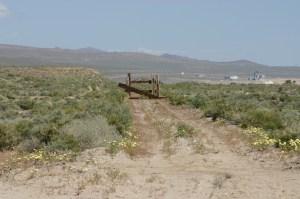 Cottonwood, near Owens Lake. 2005