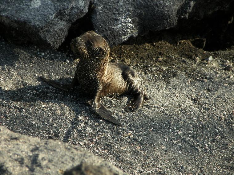 Sea Lion Photos