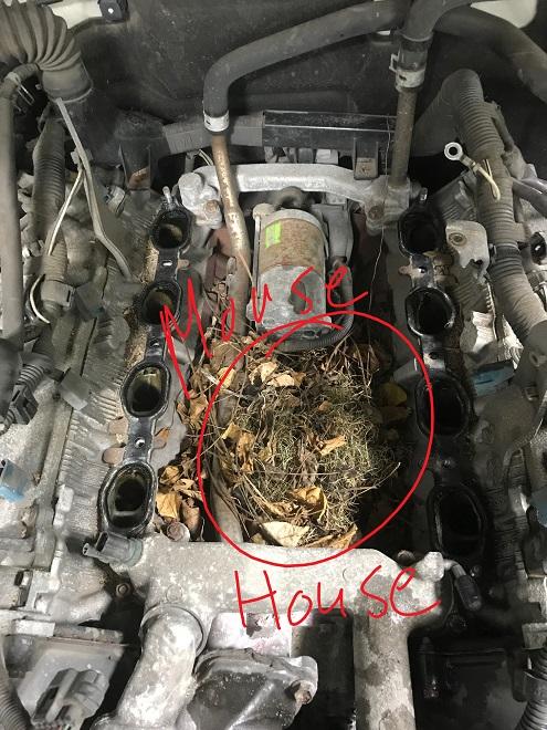 Wire Harness Diagram 97 Maxima Gx470 Check Engine Light P0325 And P0330