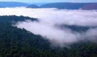 Ana Cotta CC - Floresta Amazônica