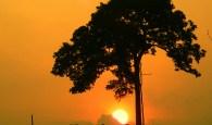 Castanheira Sunrise