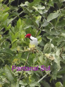Aviary Photo_130588600028770720