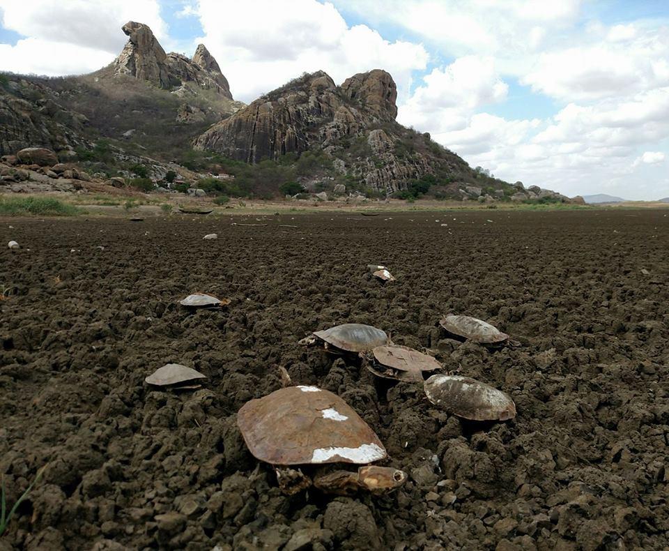 A impressionante morte de 439 quelônios em açude seco do Ceará