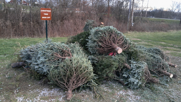So long and thanks from all the fish: KDFWR will recycle your old Christmas tree as fish habitat