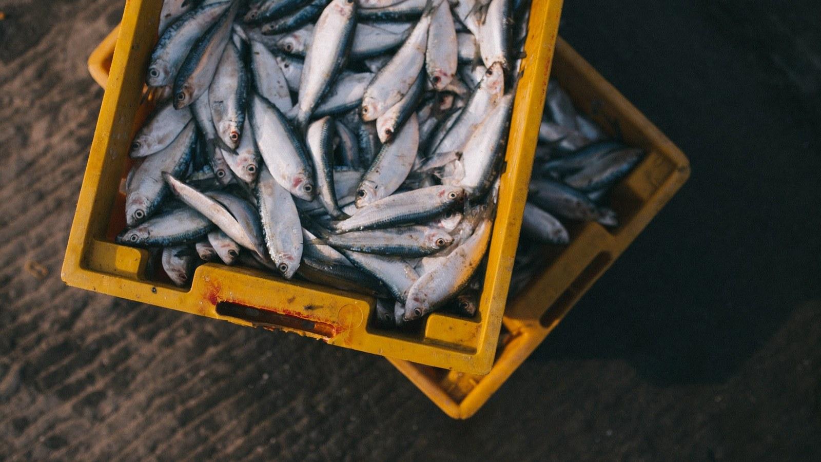 fish-in-crate