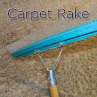 Carpet Groomer - Carpet Vidalondon