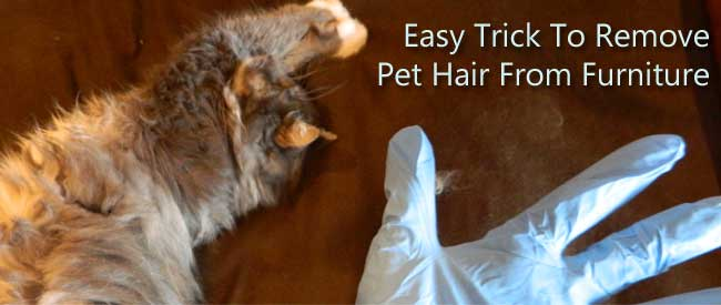 Easy Trick To Remove Pet Hair From Furniture Carters Carpet