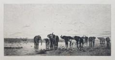 Les éléphants - Gravure ancienne
