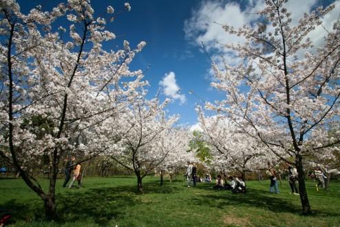 Bucuresti - Parcul Herastrau - Gradina Japoneza