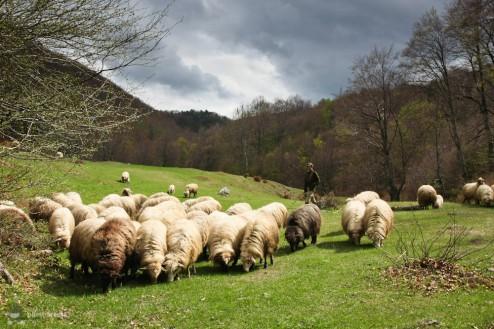 Sus, in Poiana Tasnei (Cheile Tasnei-Valea Cernei, Muntii Mehedinti)