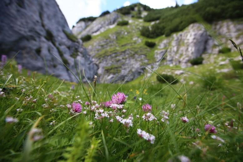 Padina si Valea Horoabei - Bucegi - iulie 2016_56