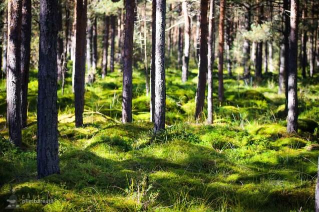 Parcul National Calimani - Tinovul Saru Dornei_09