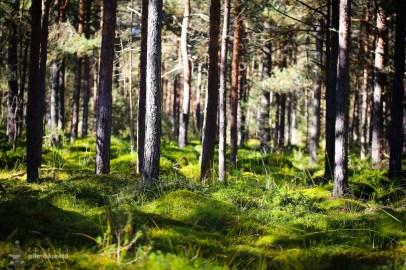 Parcul National Calimani - Tinovul Saru Dornei_10