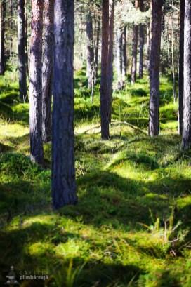 Parcul National Calimani - Tinovul Saru Dornei_11