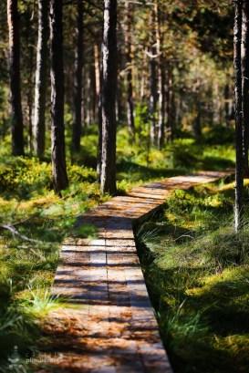 Parcul National Calimani - Tinovul Saru Dornei_12