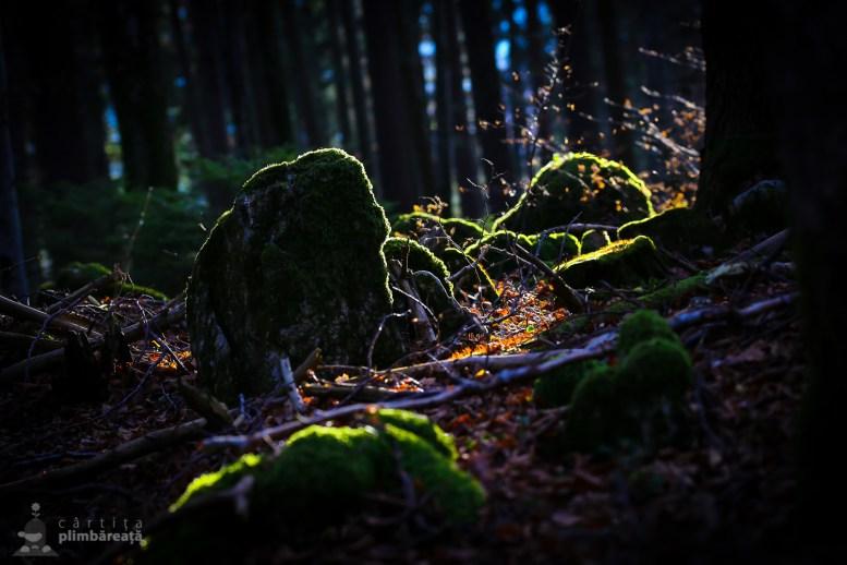 Piatra Craiului - Fantana lui Botorog - Curmatura_15