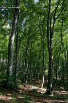 Poarta Zmeilor si Pestera Poarta Zmeilor - Culmea Bedeleului - Muntii Trascau_29