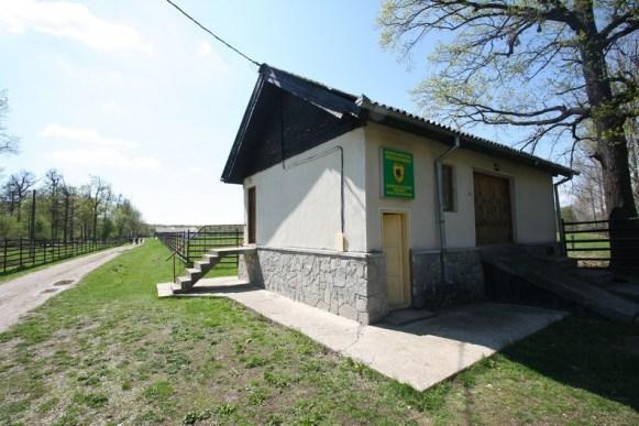 Rezervatia de zimbri Neagra de la Bucsani judetul Dambovita_13
