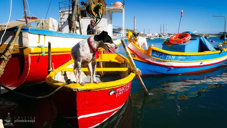 In Marsaxlokk si cainii au barcile lor :)