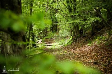 Traseu Ciucarul Mic - Defileul Dunarii_06