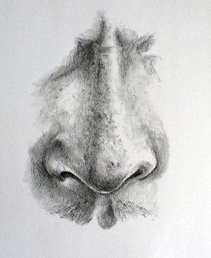 nose drawing charcoal easy draw techniques drawings realistic beginners try thevirtualinstructor cartoon eye bold