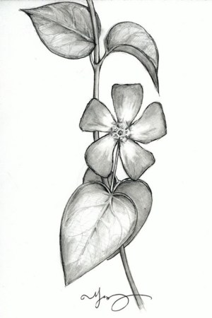pencil drawings easy flower beginners simple flowers drawing sketches draw inspiration cartoon floral cool cartoondistrict hobbylesson amazing source