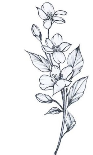 flower easy drawings simple drawing floral beginners sketches bouquet pencil flowers cartoon draw cartoondistrict source botanical amanda district tattoo