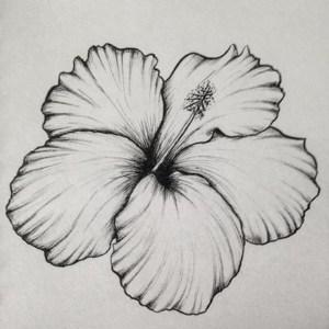 hibiscus flower drawing drawings easy pencil draw simple flowers beginners tattoo sketches hawaiian cartoondistrict sketch cartoon district step tattoos source