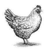 κοτόπουλο πάπρικας
