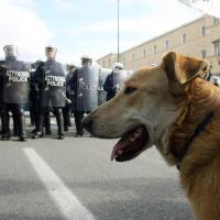 Randagio è l'eroe - Omaggio a Loukanikos, il cane della rivolta greca