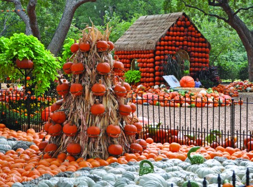 pumpkin garden with pumpkin house