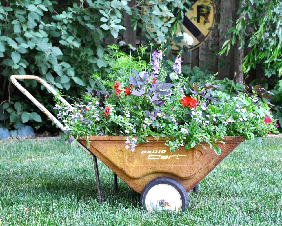 Planted vintage wheelbarrow in lawn
