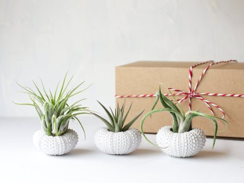 White Air Plant Jellyfish Friend Gifts