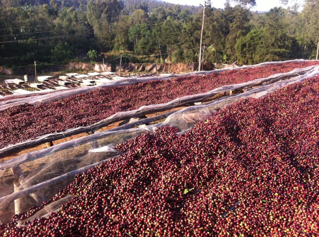 Natural Processed Coffee via @carvetiicoffee