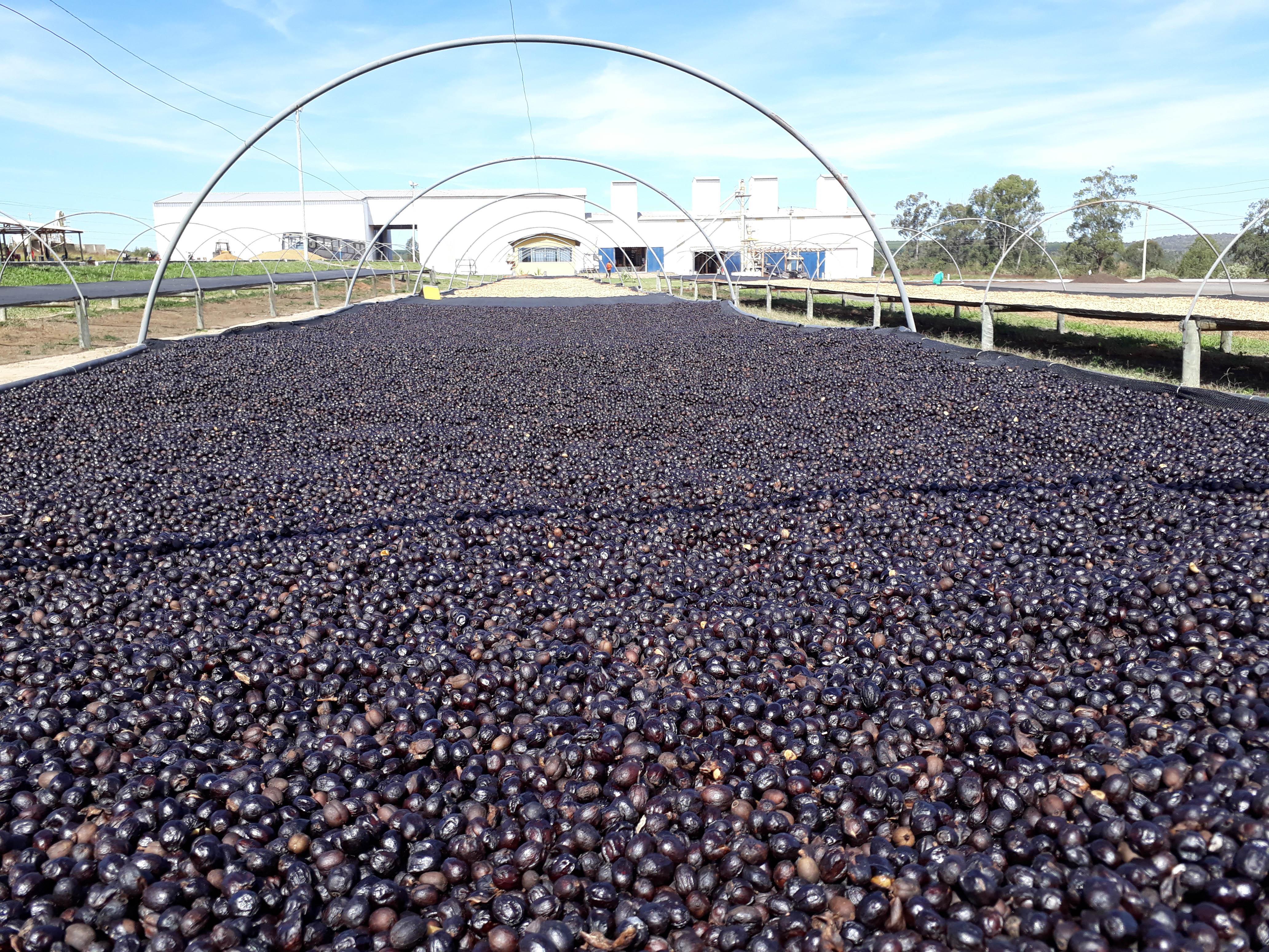 tropical-fermentation-1 via @carvetiicoffee