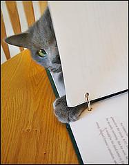 Meddling Cat
