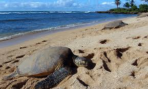 Activities Costa rica : Tortues