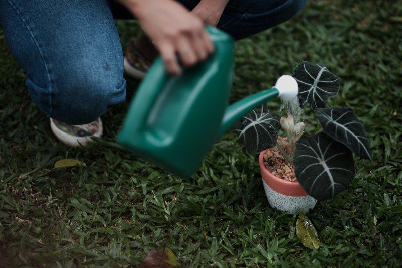 saiba quais cuidados extras voce precisa ter com as plantas no verao casa.comAtelier Colorato Marina Reis Foto Klacius Ank copy1 Vision Art NEWS