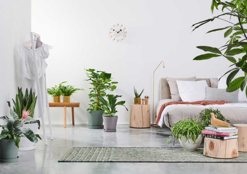 feng shui dicas iniciantes floor.br Vision Art NEWS