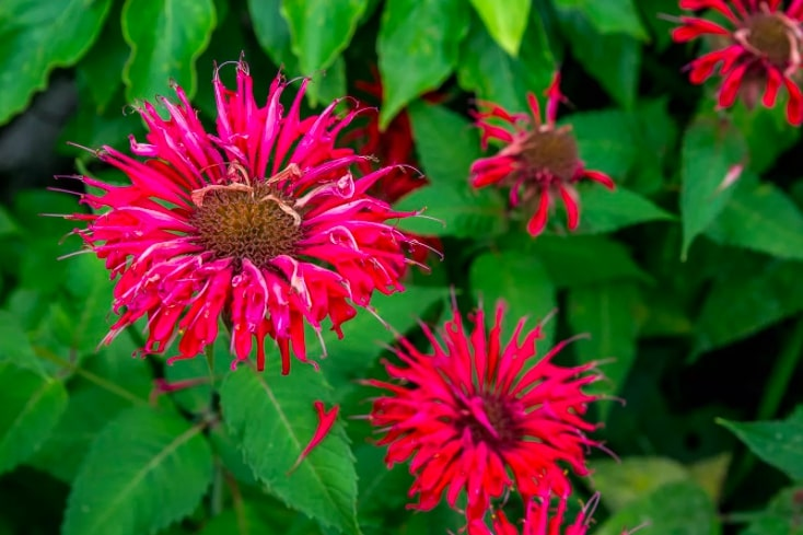 1 10 flores que vao trazer beija flores para seu jardim Vision Art NEWS