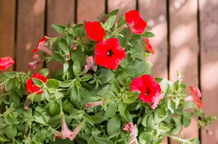 10 10 flores que vao trazer beija flores para seu jardim Vision Art NEWS