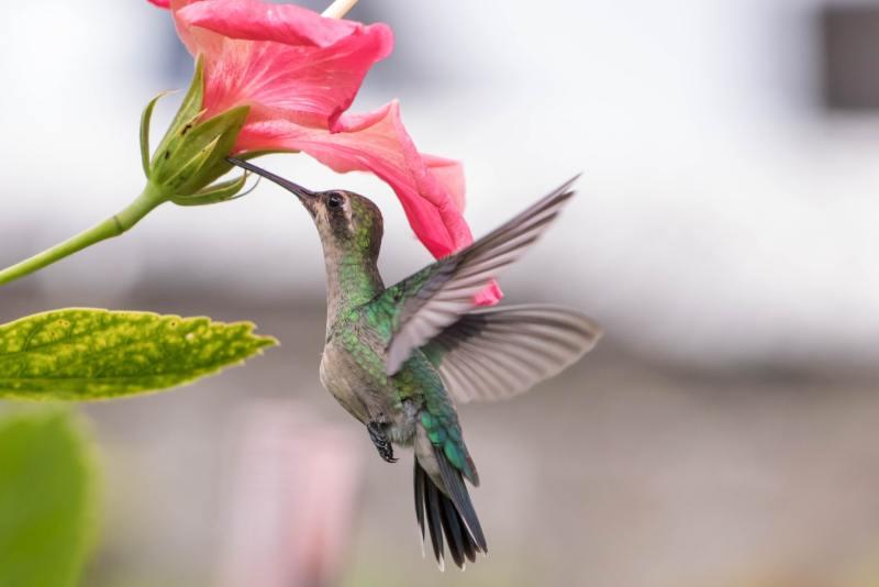 11 10 flores que vao trazer beija flores para seu jardim Vision Art NEWS