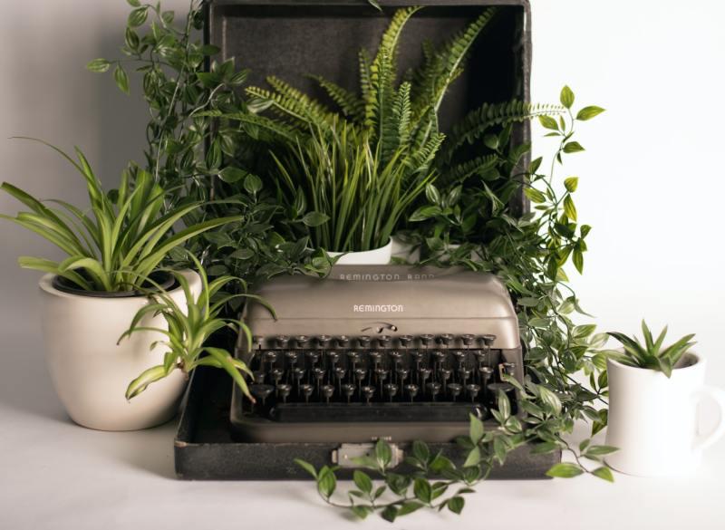 14 o guia completo para escolher o melhor vaso para suas plantas Vision Art NEWS