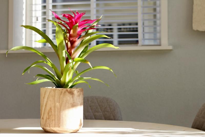15 o guia completo para escolher o melhor vaso para suas plantas Vision Art NEWS